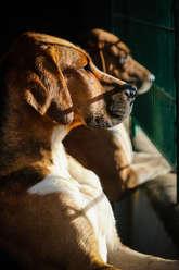 Sunlit hounds