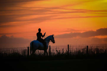 Sunset huntsman