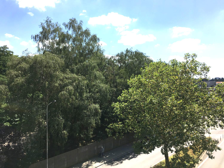 zichtbomen