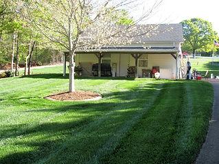 true green grass