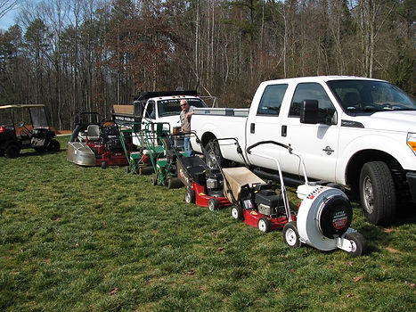 Easley tree service