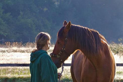 Foto Paardenwelzijn Veerle.jpg