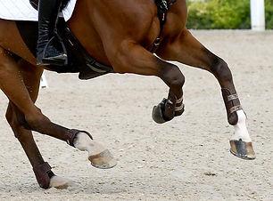 1612874745144-intoxicacion-de-caballos-d