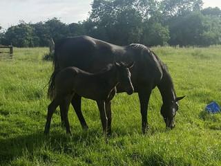 As a foal