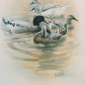 Peking-Khaki Cambell Crosses on the Nondugl Ponds