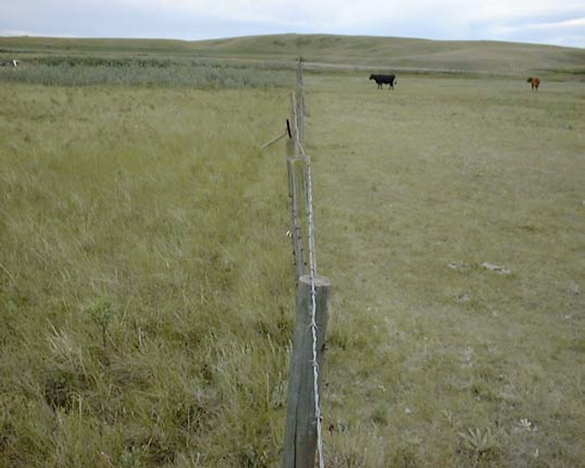 A-fence-line-contrast-in-mixed-grass-pra