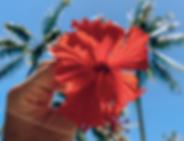Screenshot 2020-06-12 at 13.41.14.png