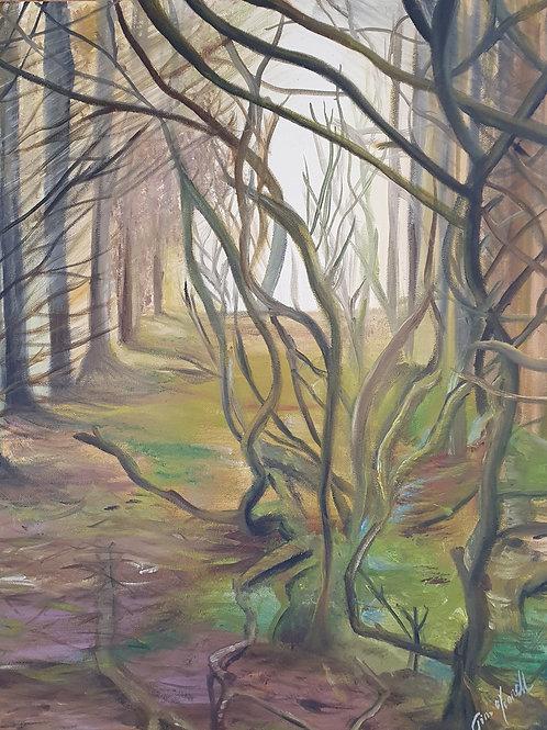 Forestry walk