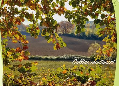 Panorama di campagna, dietro la fronda dell'albero