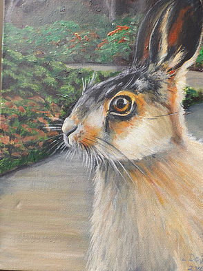 Hare at Mount Congreve
