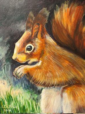Squirrel at Mount Congreve