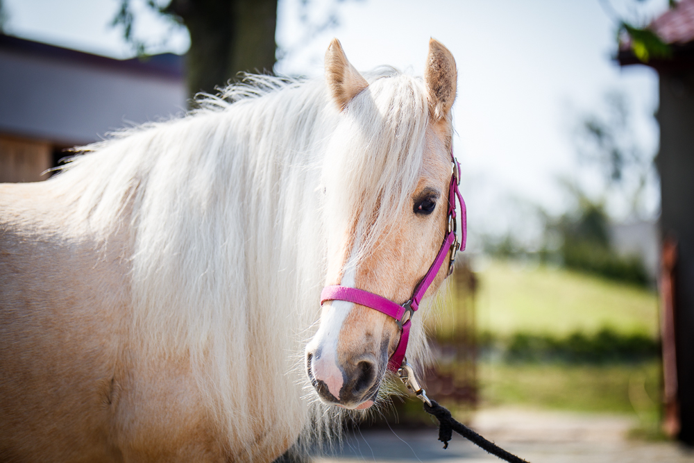 5,5 years old mare