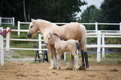 Icky and her colt (2018)
