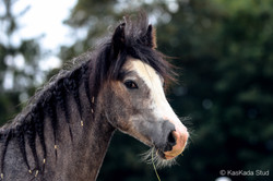 11 months old filly
