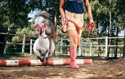 Bombel---Smallest-Horse---0065-1