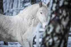 5 months old colt