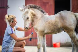 10 weeks old colt