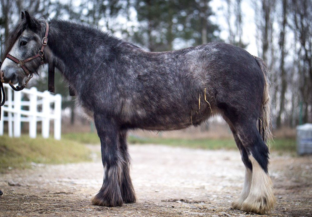 Minky - 2 years old filly