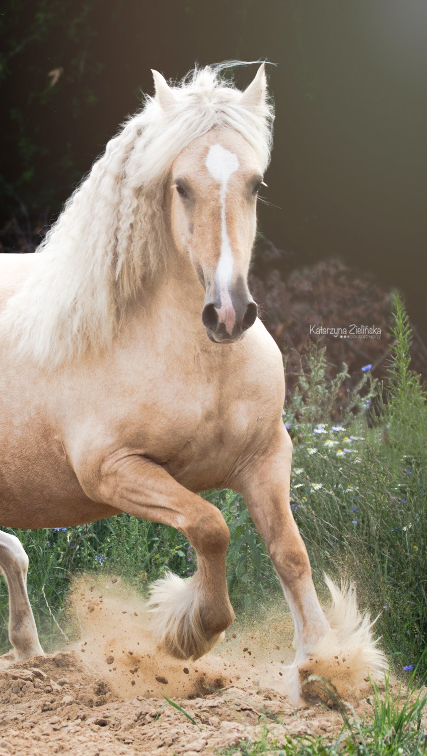4 years old mare