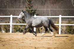 Minky - 2,5 yrears old filly