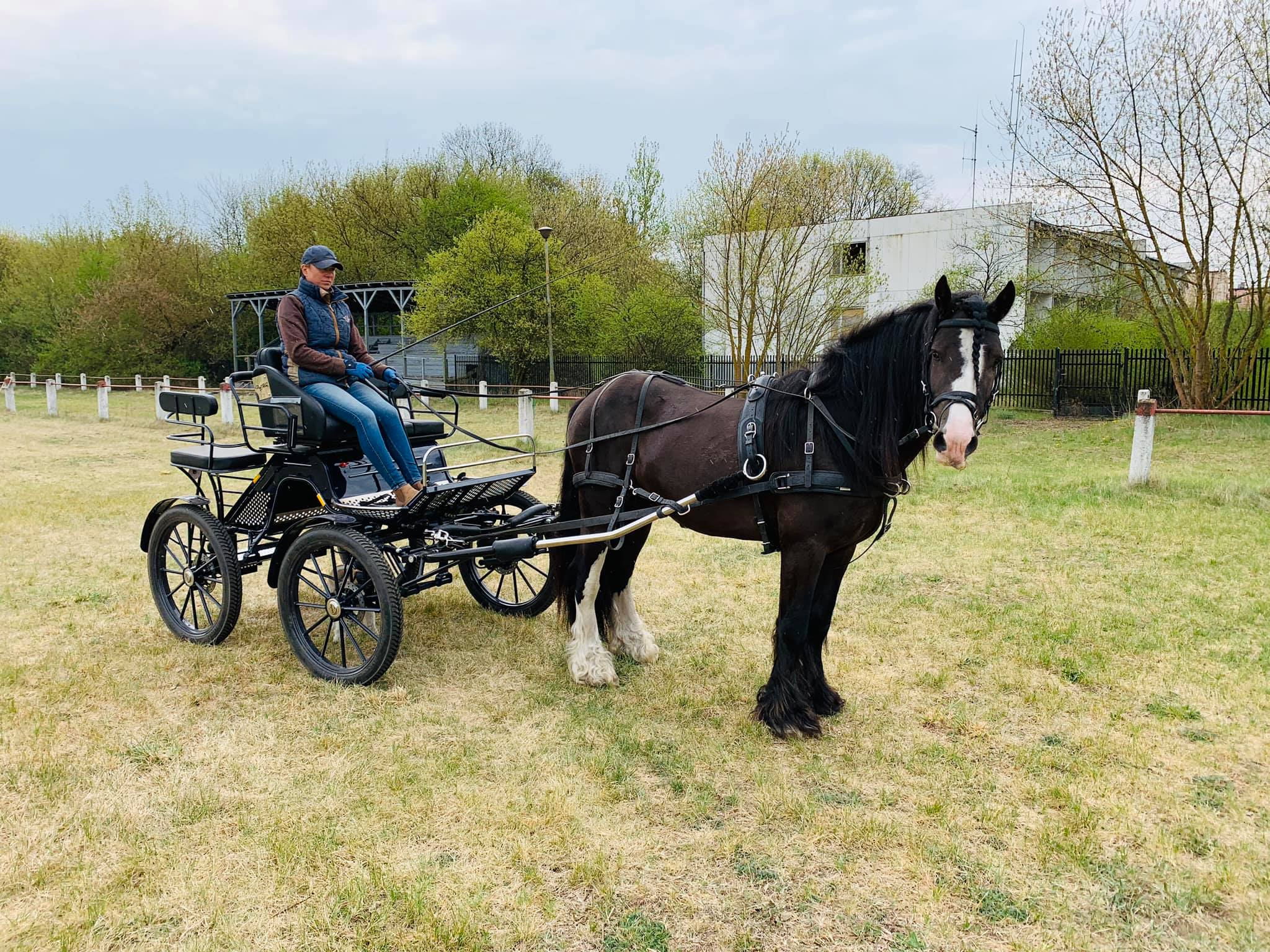 World Drivining Carriage Champion trainer