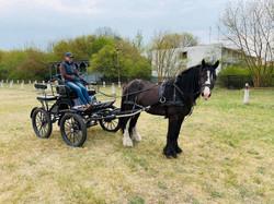 World Drivining Carriage Champion trainer
