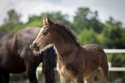 Two weeks old filly