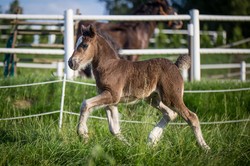 4 weeks old filly