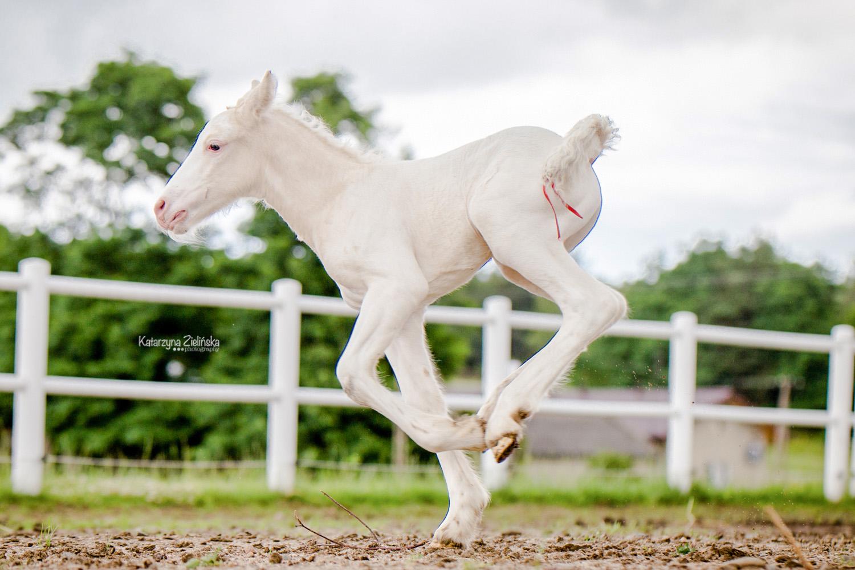 Wonderful as a 3 days colt