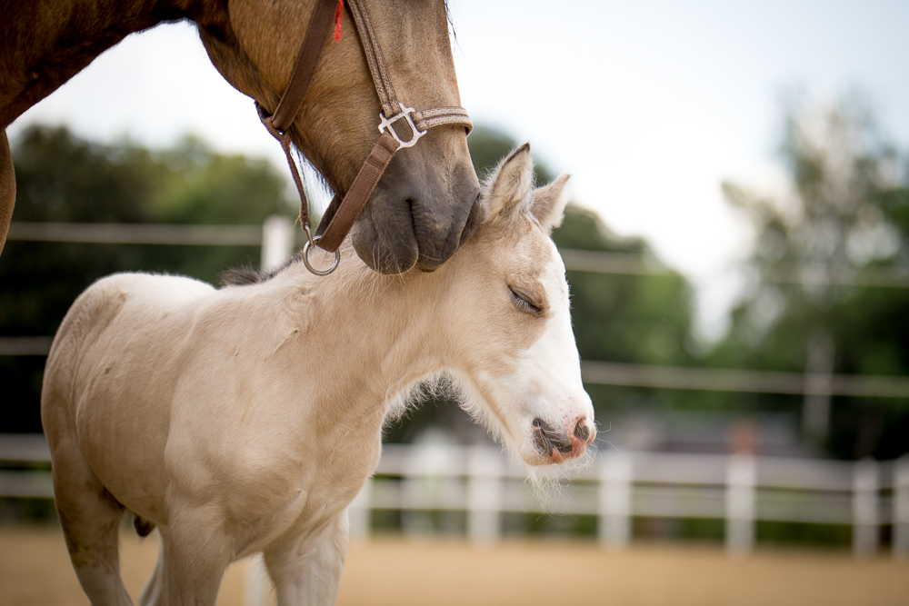 Two days old colt