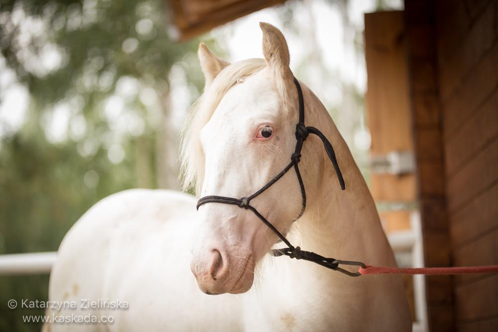 15 months old colt