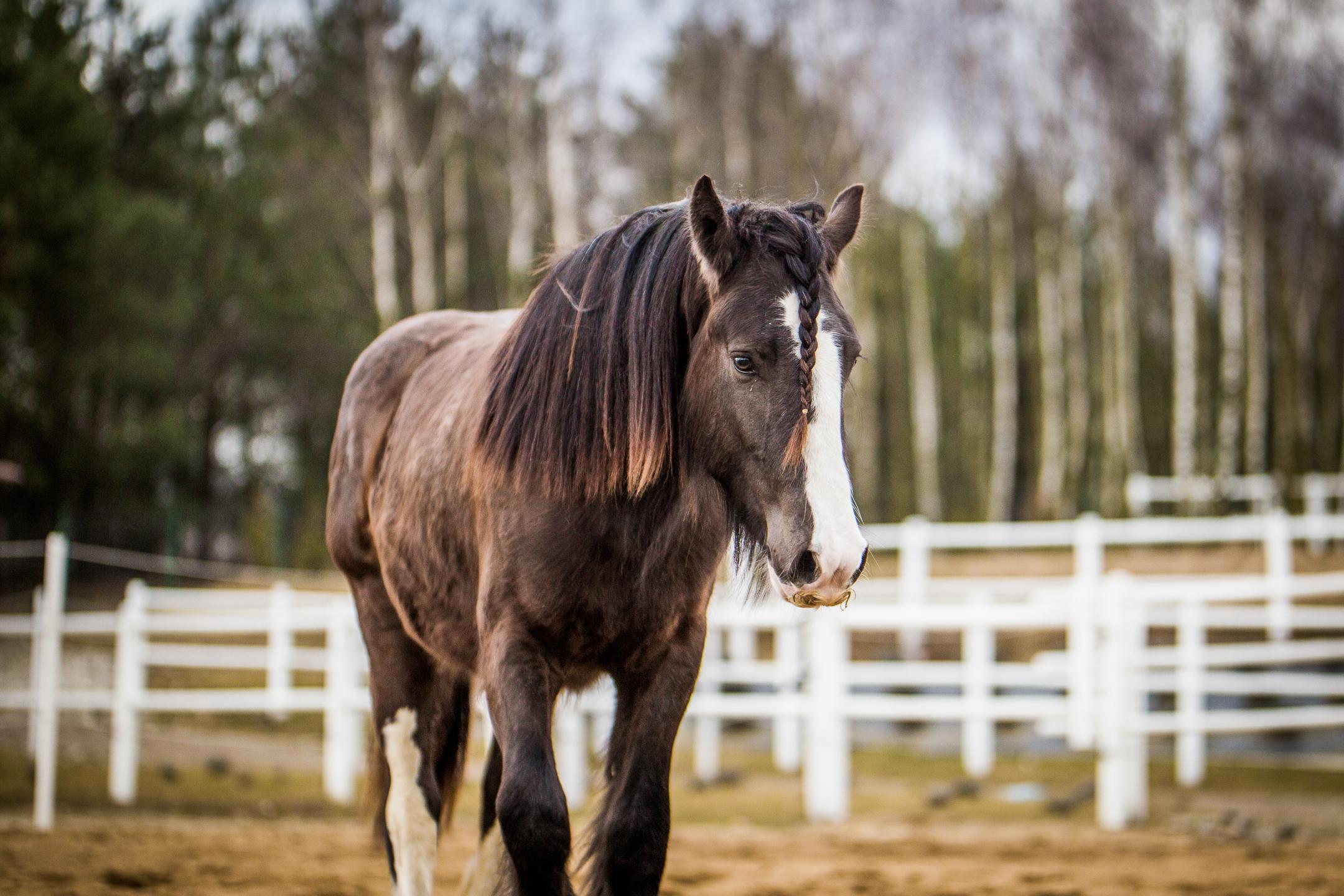Jack - 19 months old colt