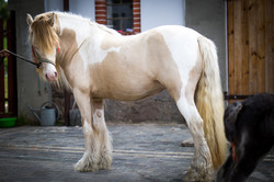 3 yrs old mare