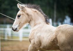 Two weeks old colt