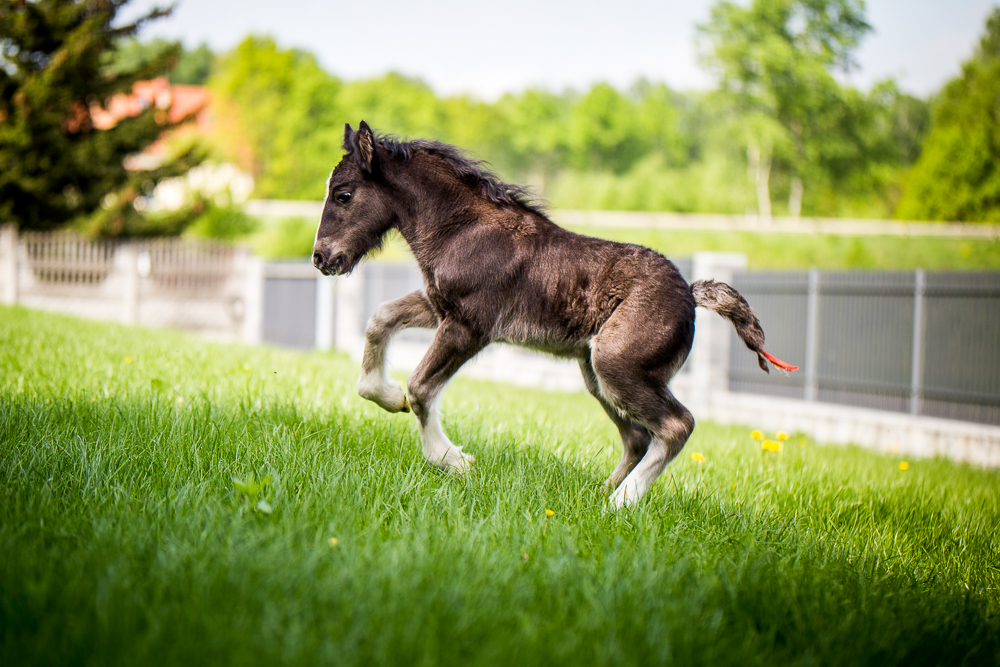 Three weeks old colt