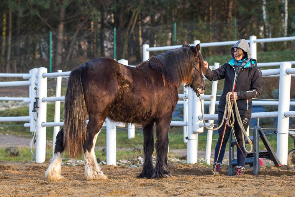 Jack - 18 months old colt