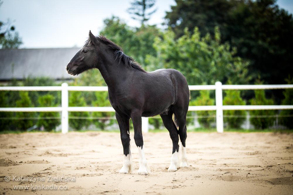 Four months old colt