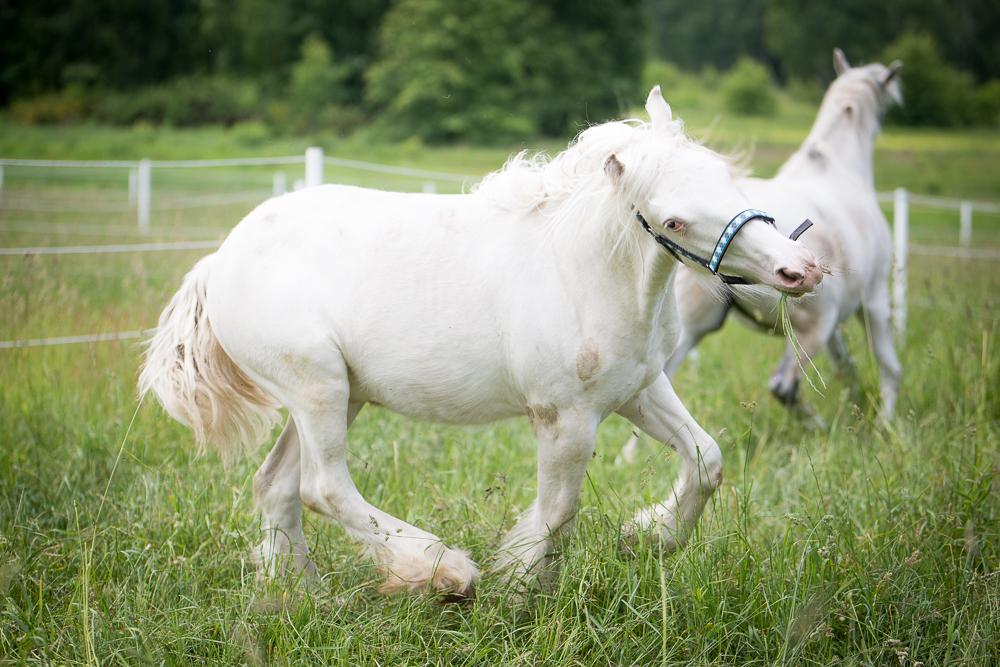 11 months old colt