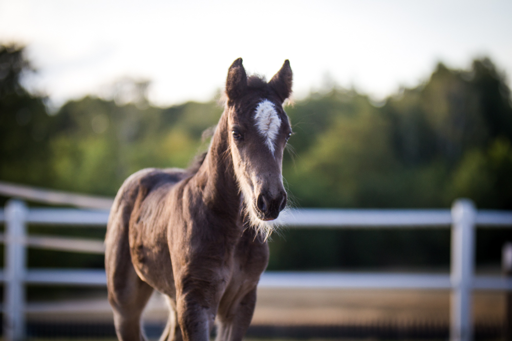 Week old filly