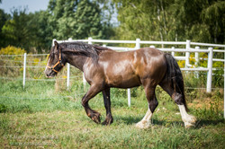 Two years old colt