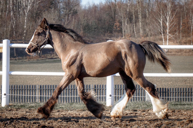 8 months old colt :)