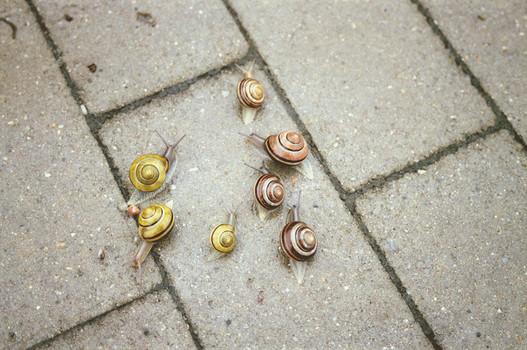 달팽이.jpg