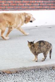 dog vs cat_edited.jpg