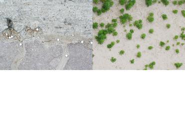 비비탄과망초.jpg