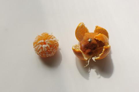 tangerin 복사.jpg