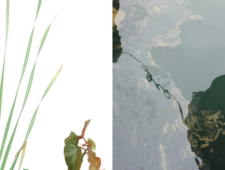 green02 vs oilysea.jpg