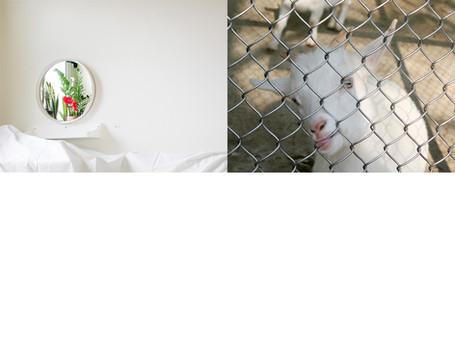 whiteroom vs goat.jpg