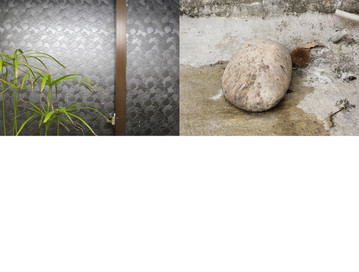 cyperus vs two.jpg