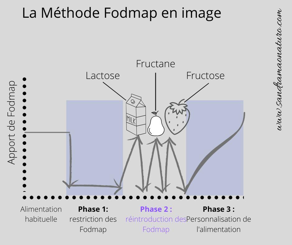 méthode Fodmap, les 3 étapes de la méthode Fodmap, phase de restriction, de réintroduction et de personnalisation