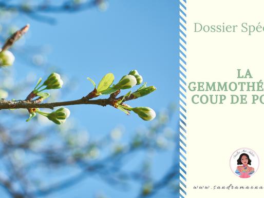 La gemmothérapie : le coup de pouce naturel pour le système digestif